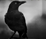 Blackbird Avatar
